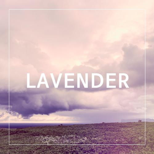 [USA] LAVENDER_라벤더(WL)