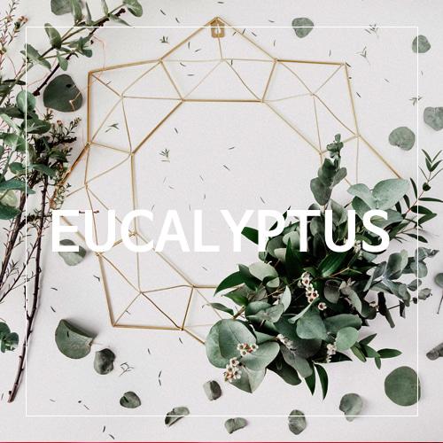 [USA] EUCALYPTUS_유칼립투스(WL)