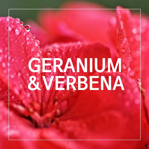 [USA] GERANIUM&VERBENA_제라늄&버베나(WL)