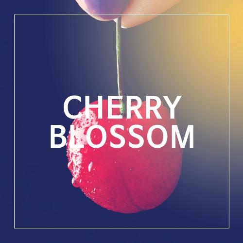 [USA] CHERRY BLOSSOM_체리블라썸(WL)