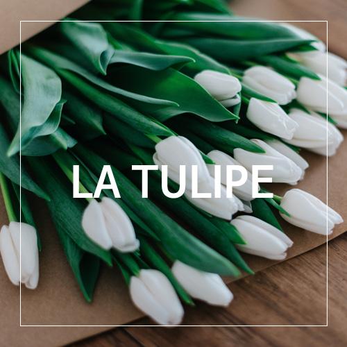 [USA] LA TULIPE_라 튤립(WL)