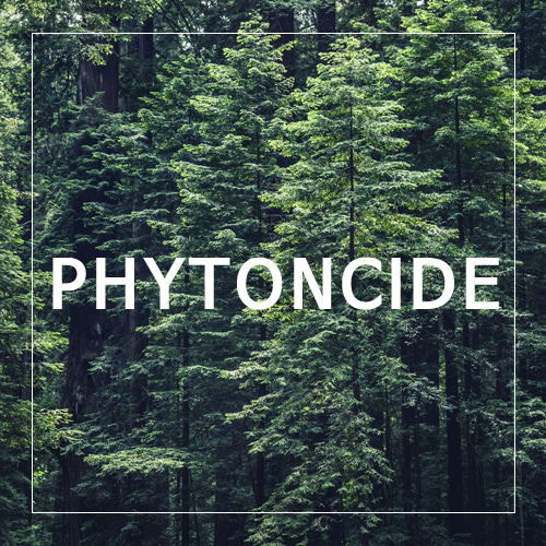 [USA] PHYTONCIDE_전나무(피톤치드)(WL)